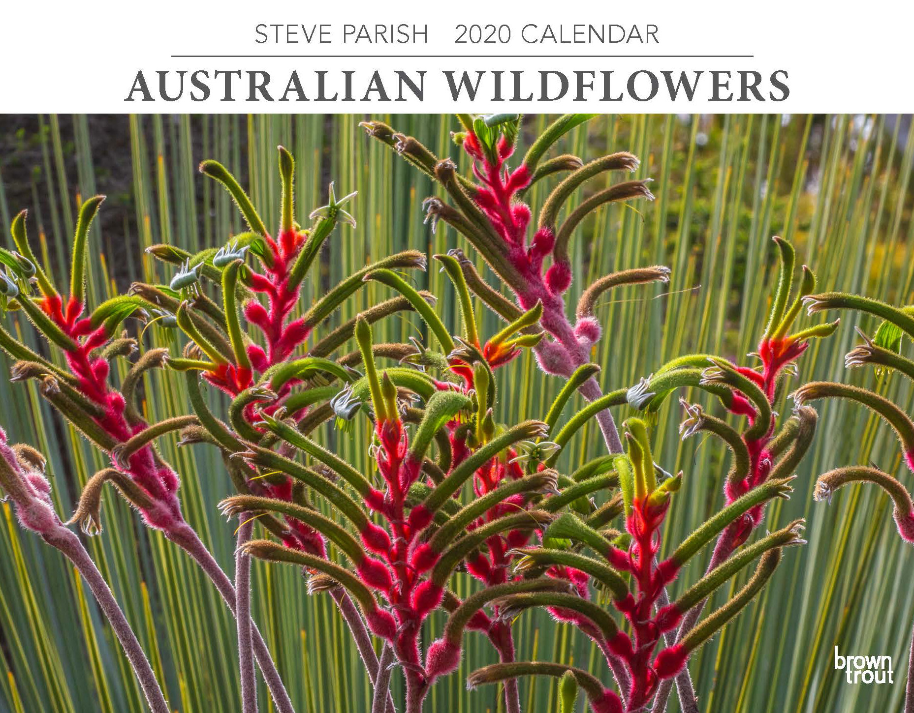 Australian Wildflowers 2020 Horizontal